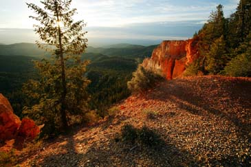 View from Canyon Rim - Early Morning Light - Bryce Canyon National Park, Utah